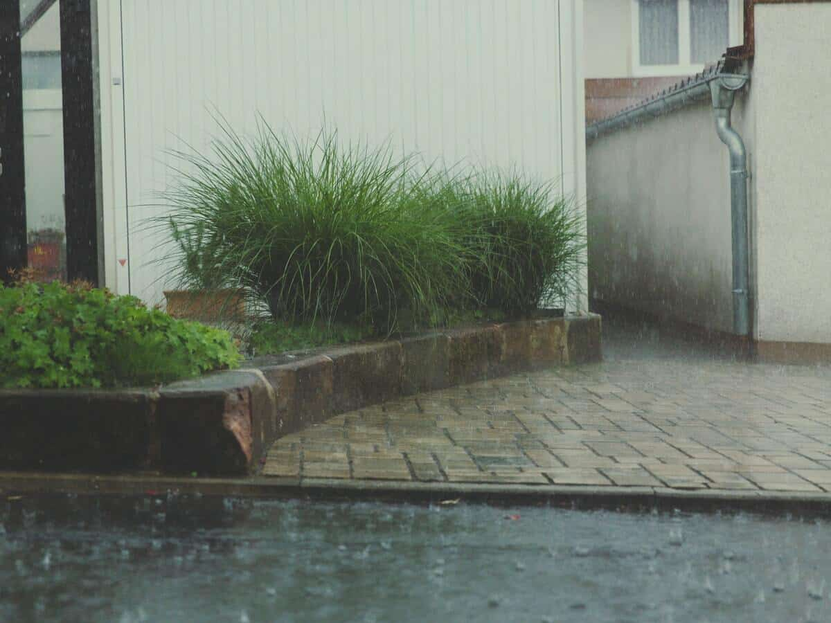 Rainfall outside the front of a home with large plants.