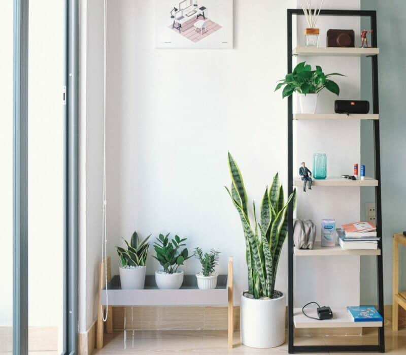 An apartment's house plants sitting next to a modern bookshelf with an assortment of items.