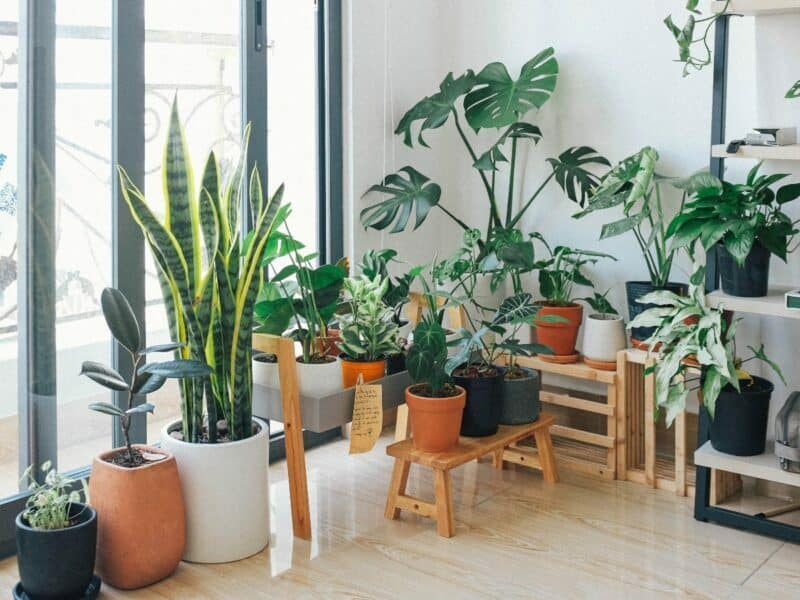 many plants at home in front of large window