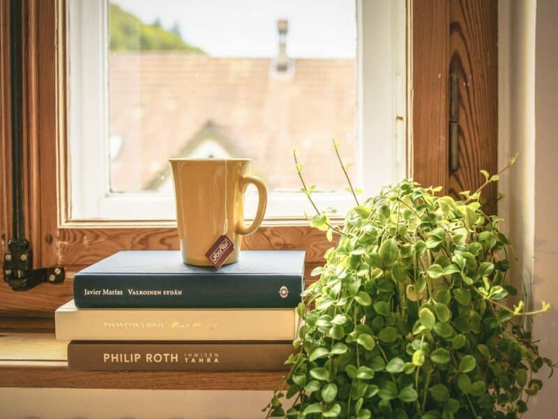 plant by the window with a cup on books