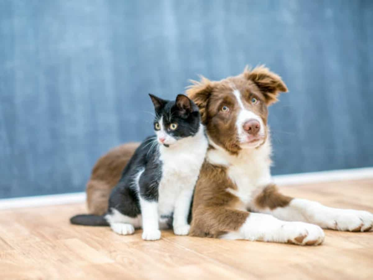 dog and cat sitting together with a blue background