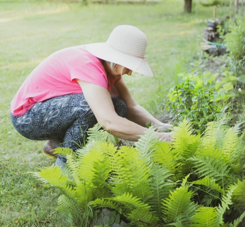 An older woman wearing a gardening hat is tending to her plants outside.