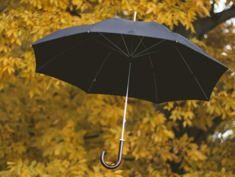 A black umbrella floating next to yellow leaves hanging from the branch of a tree.