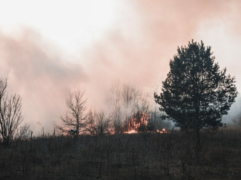 smoke and a wildfire, flames in a forest