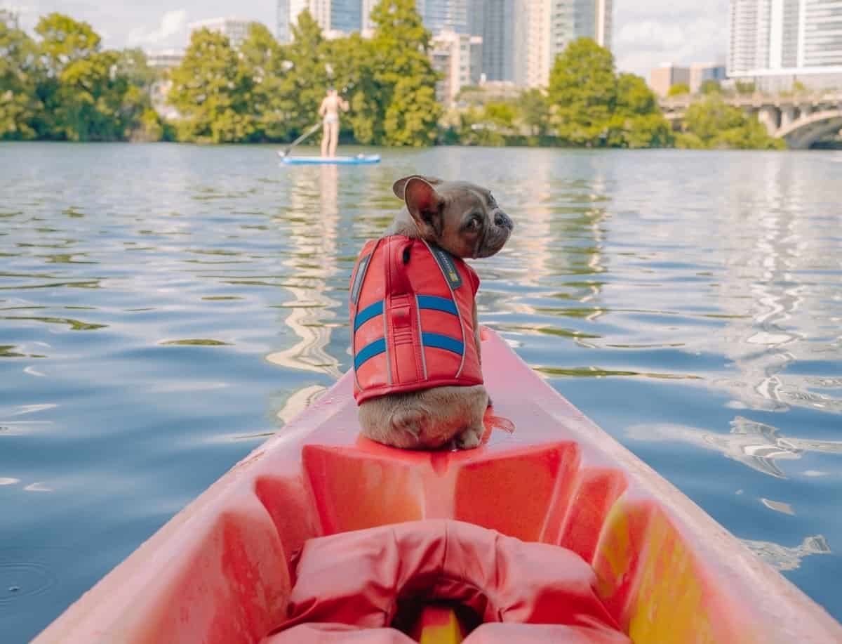 A brown pug wearing a red life vest sits at the edge of a red kayak floating by a city skyline.